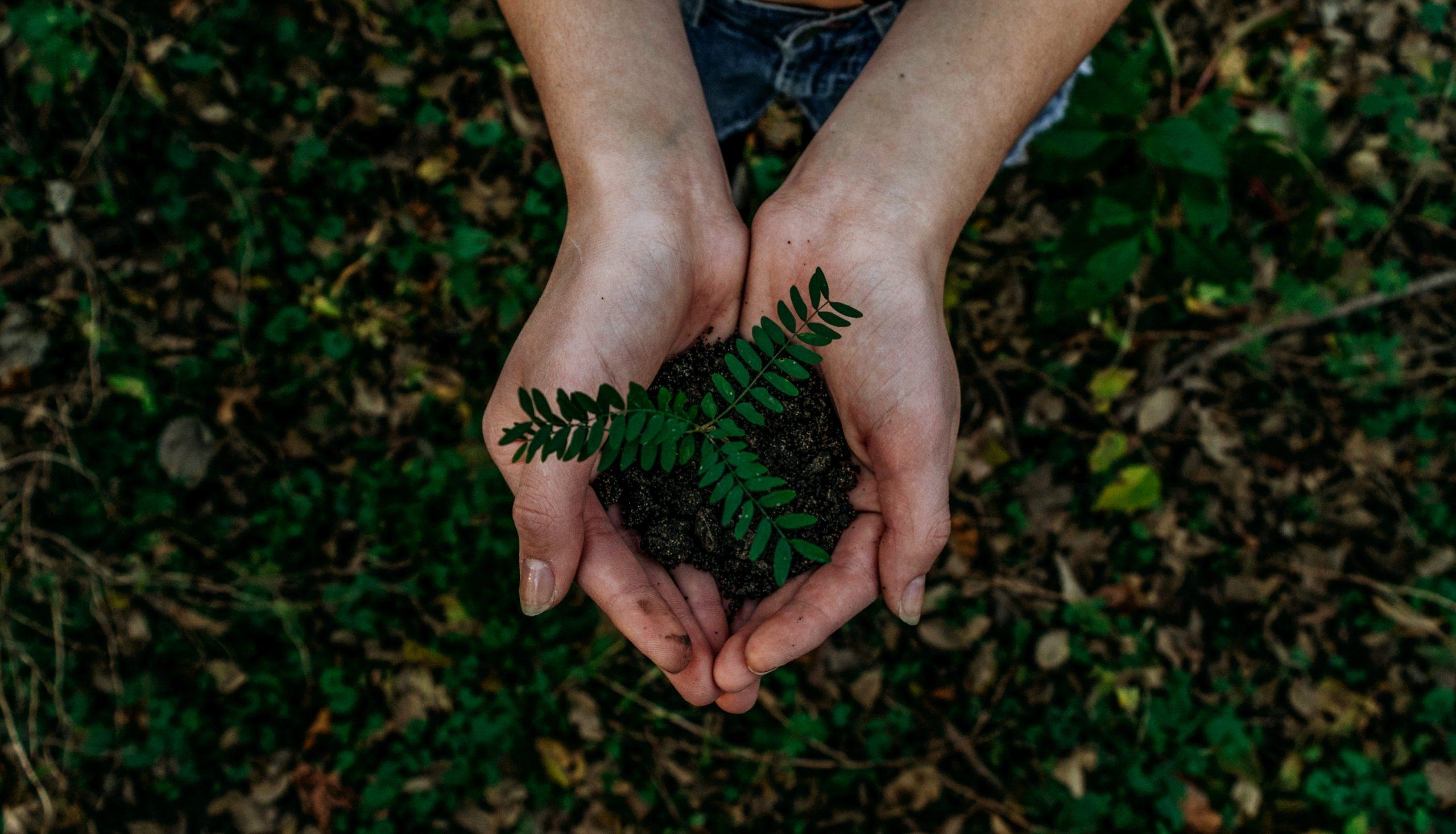 Un plantín con tierra entre dos manos